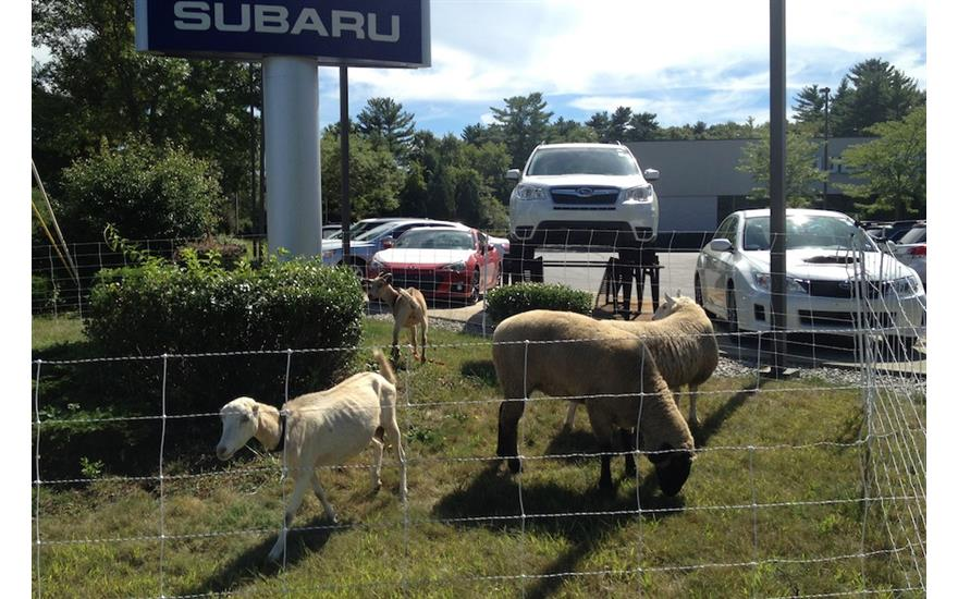 Planet Subaru Partners with Go Green Goat