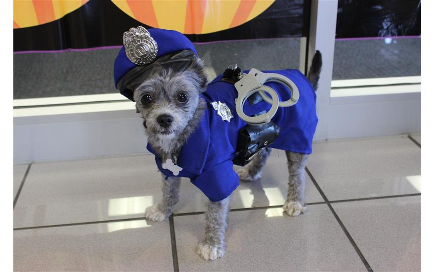 Howl-O-Ween Pet Chipping at Mark Miller Subaru